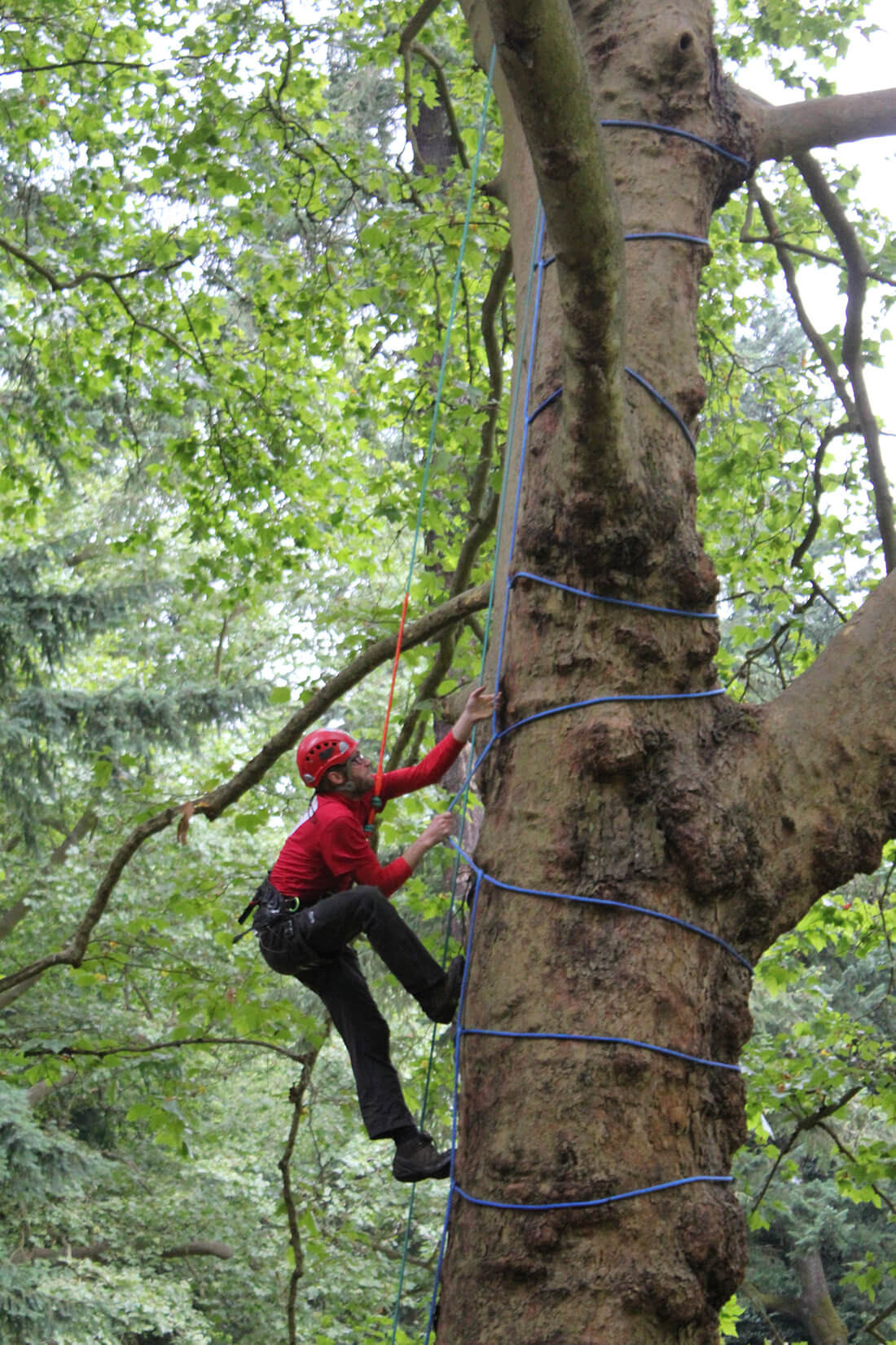 Tree Climbing Experience In Tanagro Valley Borghi Italia