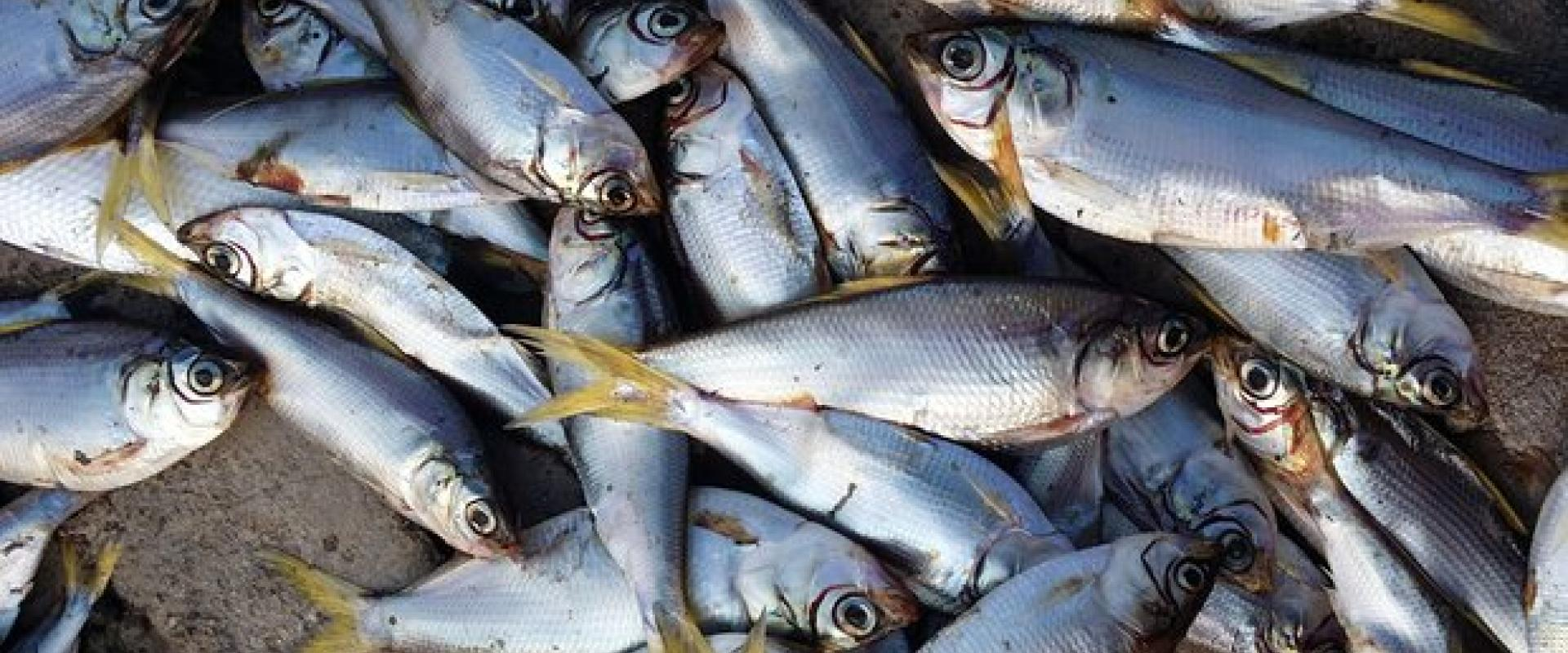 Fishing experience in Sardinia
