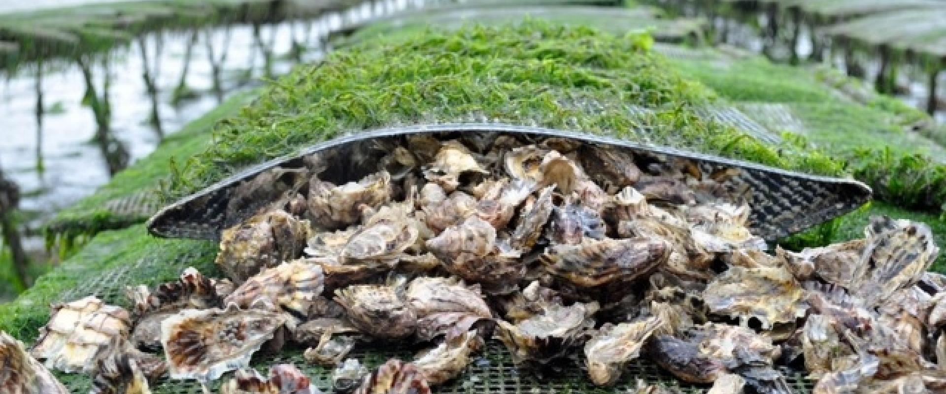 Visit of the mussels farm in Liguria