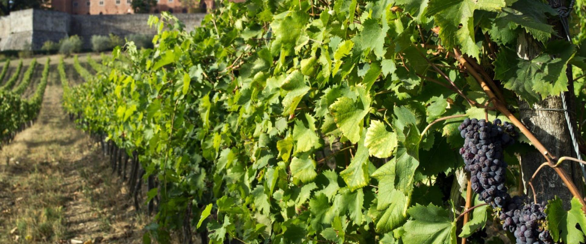 xcursion in the winery Castello di Brolio in Chianti area with visit of the cellar