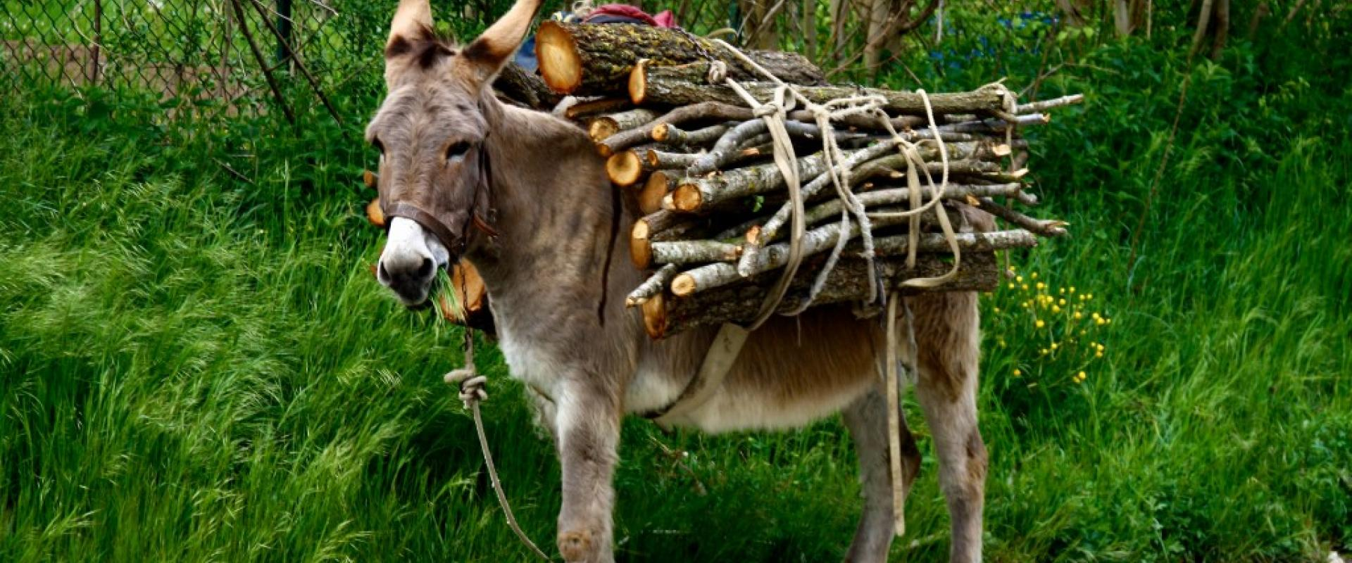 Hiking experience with donkey in the Capestrano valley