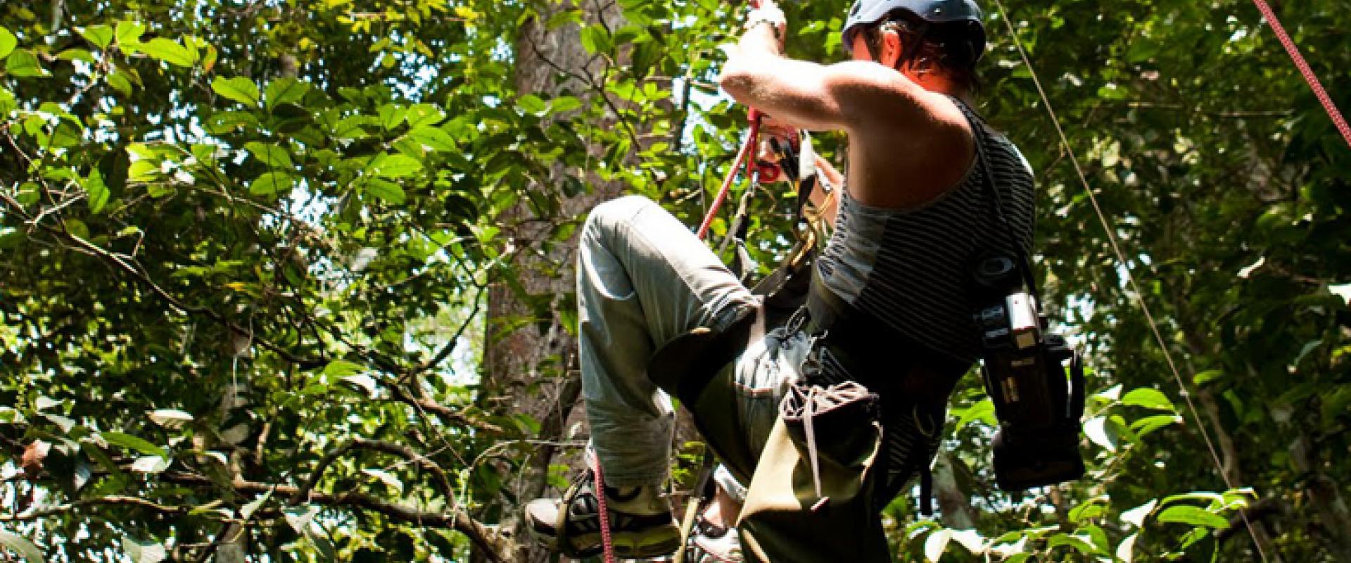 tree climbing in Tanagro valley