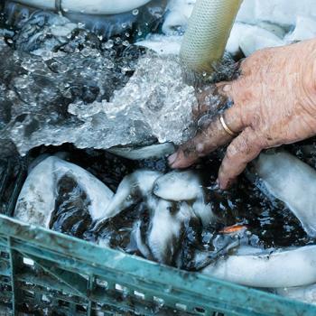 Visit the Cooperativa Pescatori Portonovo
