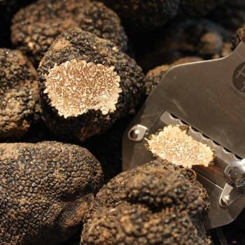 Hunting black truffles from Norcia