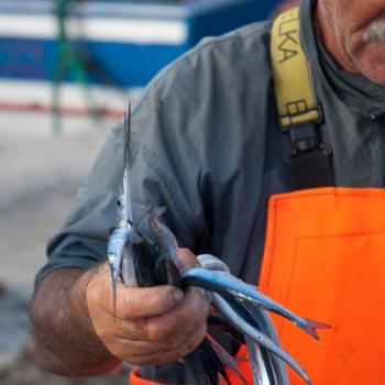 fisherman experience