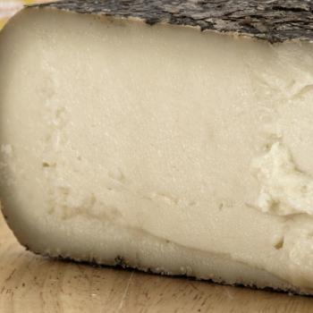 "Tasting of ""Pecorino cheese of Pienza"", An ancient culinary excellence of Val d'Orcia!"