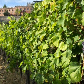 xcursion in the winery Castello di Brolio in Chianti area with visit of the cellar