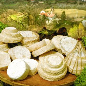 Cheeses tasting