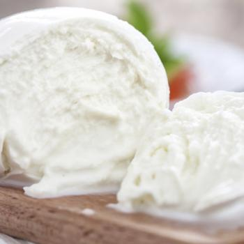 Visit of a diary farm of organic Buffalo milk mozzarella in Paestum.