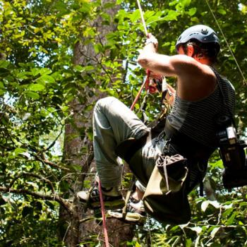 tree climbing in Tanagro valley